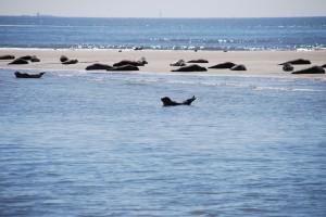 an den Seehundbänken