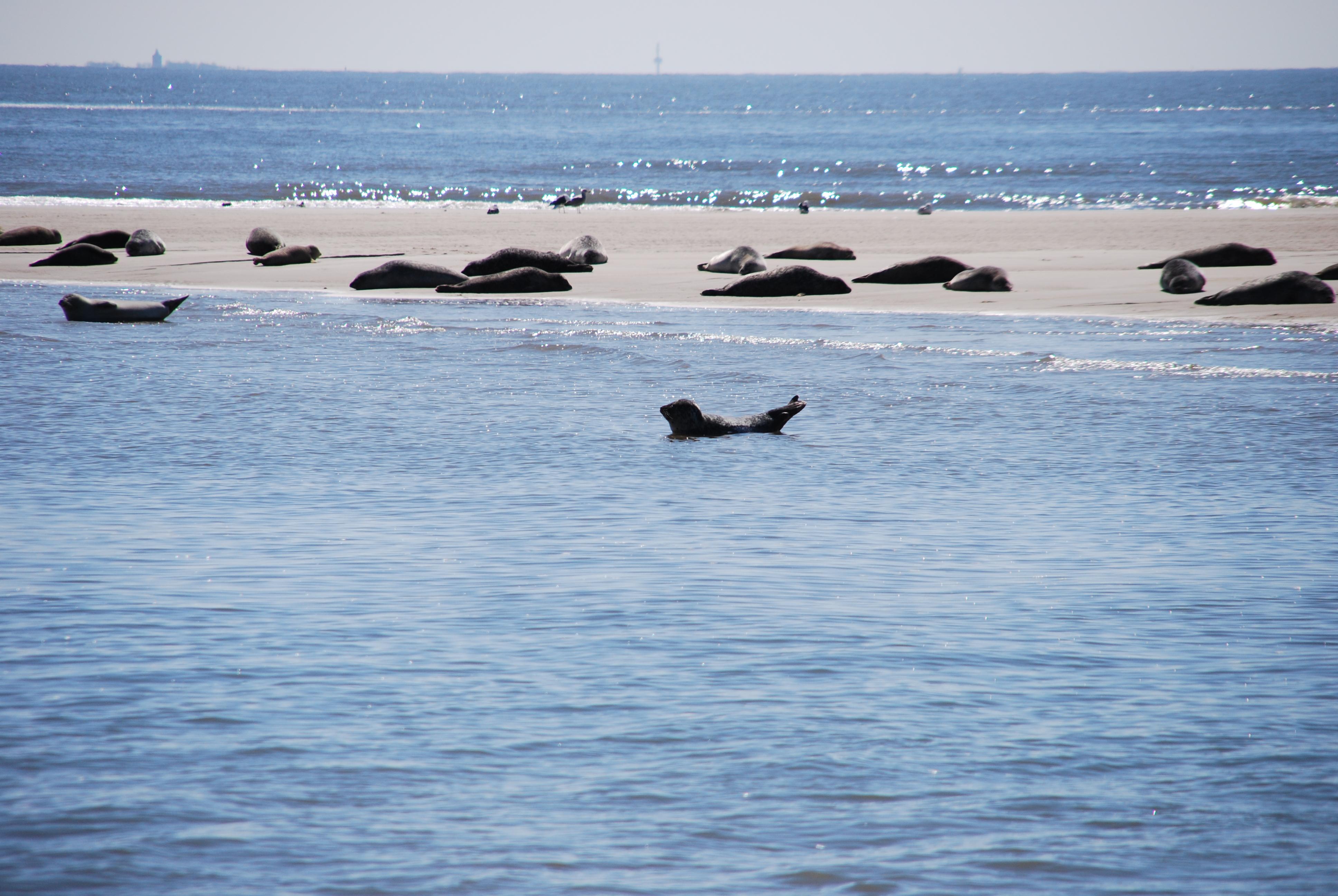 Ausflug zu den Seehundbänken - Insanire