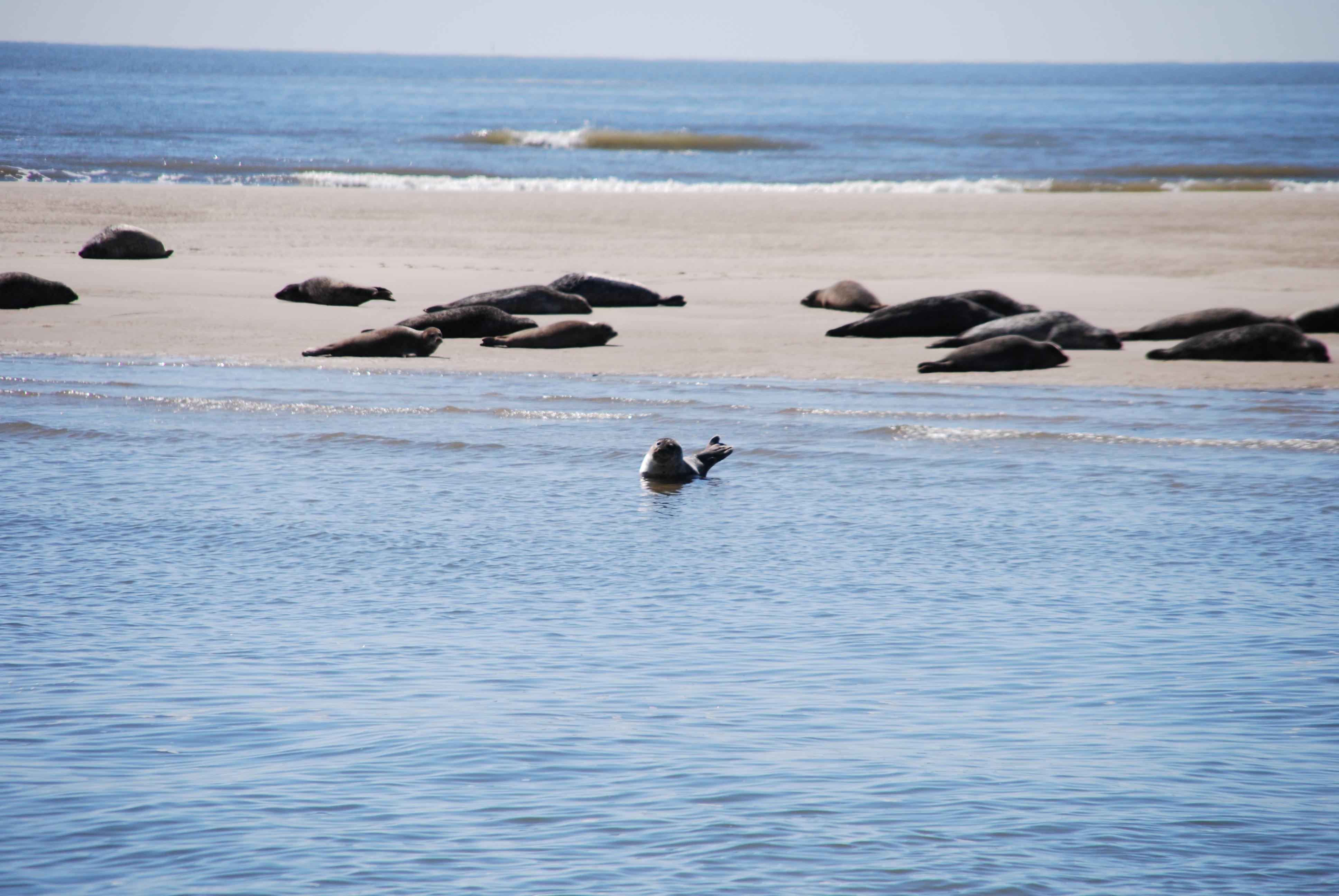 Ausflug zu den Seehundbänken