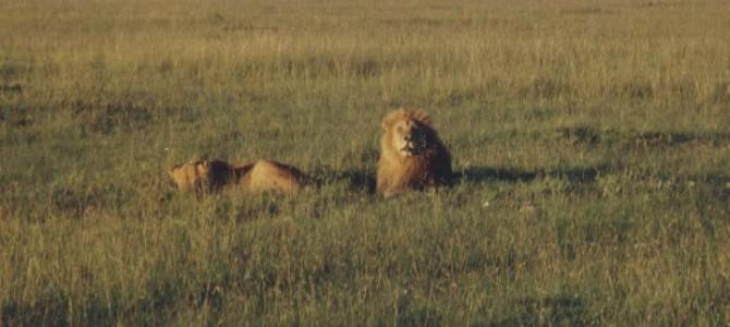 Masai Mara – Kenia